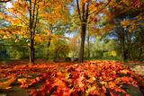 Colorful Autumn Papier Photo par Philippe Sainte-Laudy