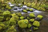 Mossy Rocks along a Creek