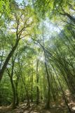 Lighting Forest
