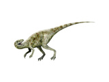 Staurikosaurus Dinosaur