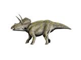 Eotriceratops Dinosaur