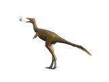 Shuvuuia Dinosaur