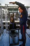 A Project Quickfind Trainer Training a Young California Sea Lion