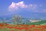Val D'orcia Tuscany Itlay