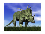 Styracosaurus Dinosaur Walking in the Grass