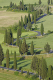 Winding Road Lined with Cypress Trees  Monticchiello  Siena Province  Tuscany  Italy