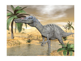 Suchomimus Dinosaur Walking in the Water in Desert Landscape