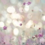 Floral Meadow I
