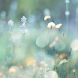 Morning Meadow I
