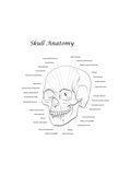 Line Illustration of a Human Skull with Labels