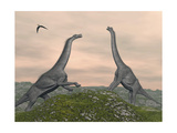 Two Brachiosaurus Dinosaurs Fighting