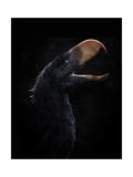 Andalgalornis Steulleti  a Flightless Predatory Bird