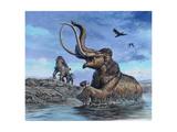 Columbian Mammoth Trapped by Asphalt at La Brea Tar Pits  California