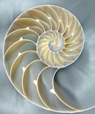 Nautilus In Blue I