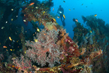 Coral Encrusted Wreckage on the Liberty Wreck  Tulamben  Bali  Indonesia