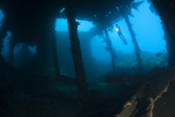 Diver Exploring the Liberty Wreck  Tulamben  Bali  Indonesia