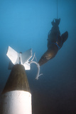 A California Sea Lion Attaches a Device onto a Mock Asroc Missile Underwater
