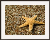 Glass Beach with Star Fish  Kauai  Hawaii  USA