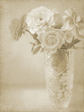 Soft Roses I