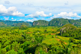 The Vinales Valley in Cuba  a Famous Tourist Destination and a Major Tobacco Growing Area