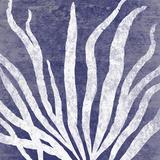 Reef IV