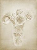 Soft Roses II