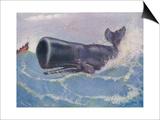 Sperm Whale Physeter Macrocephalus