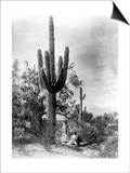 Saguaro Fruit Gatherers