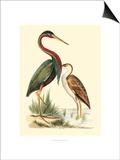Water Birds III