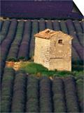 Stone Structure in Lavender Field