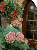 Geraniums and Hydrangea by Doorway  Chateau de Cercy  Burgundy  France