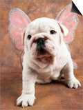 Bulldog Puppy Wearing Angel Wings