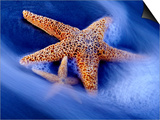 Two Starfish on Beach  Hilton Head Island  South Carolina  USA