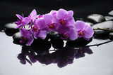 Purple Orchid and Black Stones with Reflection
