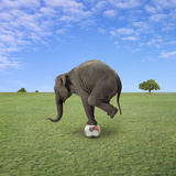 Elephant Balancing on Football