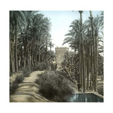 Elche (Spain)  the Forest of Palm Trees and the Tower of the Castle  Circa 1885-1890
