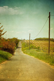 Vineyard with Telephone Polled at Road