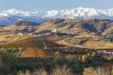 Vineyards  near Alba  Langhe  Piedmont  Italy