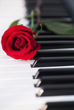 Close up of Red Rose Lying on Piano Keys