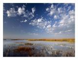 Marsh  Padre Island National Seashore  Texas
