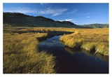 Blacktail Lake  Yellowstone National Park  Wyoming