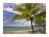 Palm trees line Penca Beach  Costa Rica