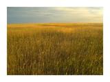 Upper prairie in Badlands National Park  South Dakota