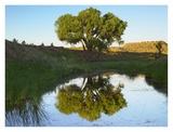 Tree reflecting in creek near Black Mesa State Park  Oklahoma