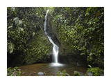 Waterfall in the Milpe Bird Sanctuary  Mindo Cloud Forest  Ecuador