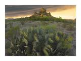 Opuntia and hoodoos  Big Bend National Park  Chihuahuan Desert  Texas