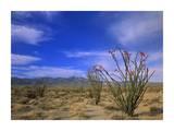 Ocotillo and the Vallecito Mountains  Anza-Borrego Desert State Park  California