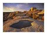 Water that has collected in boulder  Joshua Tree National Park  California