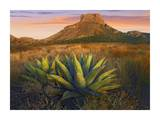 Casa Grande butte with Agave in foreground  Big Bend National Park  Texas