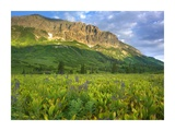 Gothic Mountain overlooking meadow near Crested Butte  Colorado